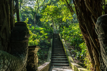 Forest in Ubud, Bali, Indonesia