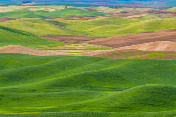 Canvas Prints Hill Amazing green hills. Plowed fields, an incredible drawing of the earth. Steptoe Butte State Park, Eastern Washington, in the northwest United States.