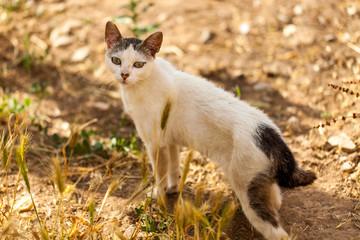 Gato pequeño