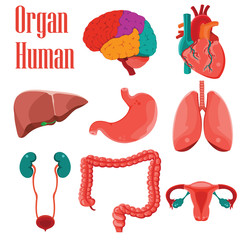 Human organs colorful  icon set.