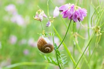 Snail on grass.