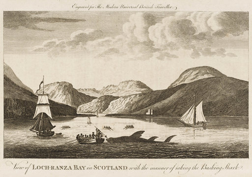 Fishing for basking sharks in Loch Ranza Bay. Date: 1779
