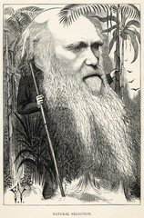 Charles Darwin as a wild man of the jungle. Date: 1873