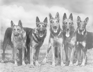 Fall - Gsd - 1935 - Group. Date: 1935