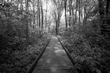 A wooden path runs through a forest, black and white