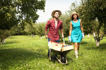 Young couple with wheelbarrow in orchard