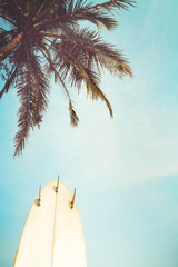 Wall Mural - Surf board with palm tree in summer season. vintage color tone