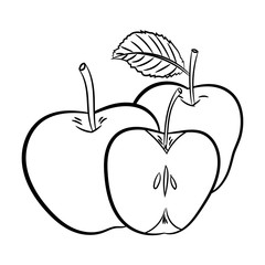 Line Drawing of Apples -Simple line Vector