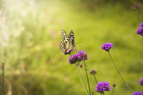 Beautiful Butterfly On Colorful Flower Garden Background Nature - Colorful flower garden background