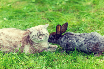 Cat and rabbit lying together outdoor on the grass