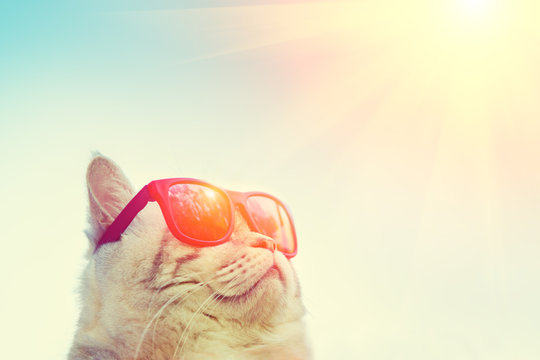 Portrait of cat wearing sunglasses against sky, looking at the sun