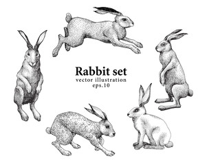 Set of hand drawn rabbit illustrations isolated on white background. Vector vintage illustration.