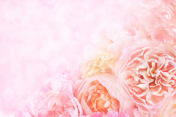Summer blossoming roses, flower bokeh background, pastel and soft floral card