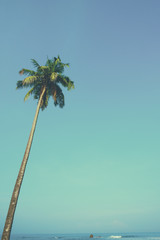 One tropical palm tree hang over the ocean vintage color toned with copy space