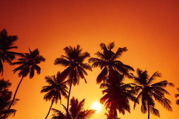 Palm trees silhouettes on tropical beach at summer sunset
