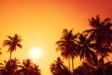 Palm trees silhouettes on tropical beach at sunset