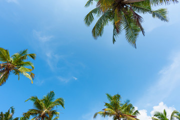 Palm tree leafs with blue sky as copy-space