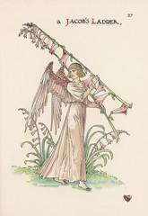 Polemomium Caeruleum. Date: 1905