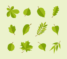 Types of Leaves - modern vector flat design icons set.