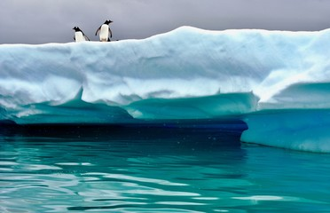 Canvas Prints Antarctica Penguins perched on iceberg near Cuverville Island, Antarctica