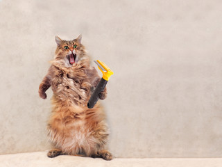 The big shaggy cat is very funny standing.groomer 9 Wall mural