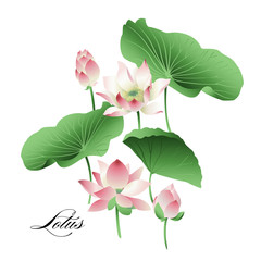 Vector set of hand drawn lotus flowers and leaves. Watercolor.