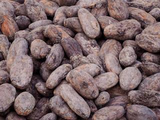 Macro image of cocoa beans