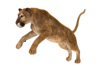 3D Rendering Big Cat Puma on White