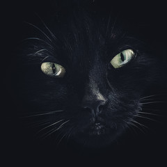 image filled with a black cats face only
