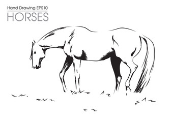 hand drawn vector illustration od horse on meadow