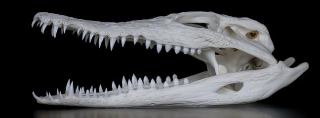 Garden Poster Crocodile Schädel eines Nilkrokodil (Crocodylus niloticus) mit geöffnetem Maul