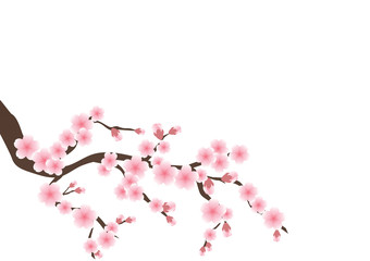 Cherry blossom flowers background. Sakura  pink flowers background.