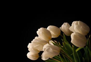 White tulips on a dark background