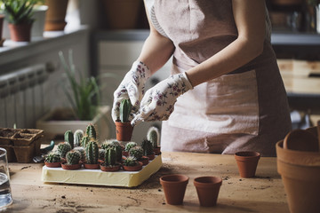 Woman planting cacti in small pots
