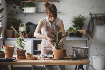 Pretty Caucasian woman florist putting plant in pot at her workshop.