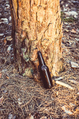 An old, dirty, brown beer bottle stands on the ground near a tree in a pine forest. Pollution of the environment. Destruction of nature.