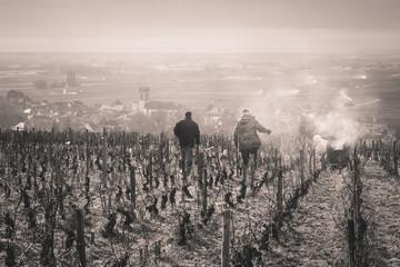 travailleurs dans les vignes