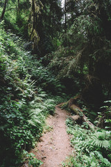 Northern California - Redwoods