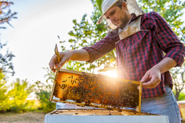 Beekeeper checking beehives