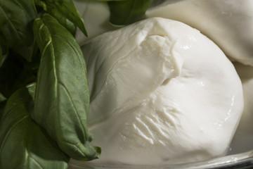 Mozzarelle di bufala Campana con foglie di Basilico