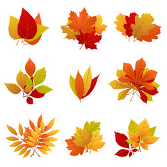 Wall Mural - Autumn leaves yellow foliage vector set