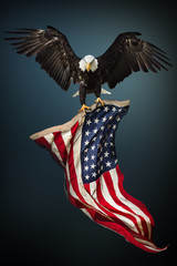 Foto op Plexiglas Eagle Bald Eagle with American flag