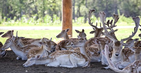 Beautiful picture with a group of cute small deer