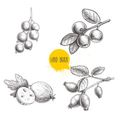 Hand drawn sketch style berries set. Blueberry branch, rose hip branch, black or red currant and gooseberries with sliced berry. Eco berries vector illustration isolated on white background.