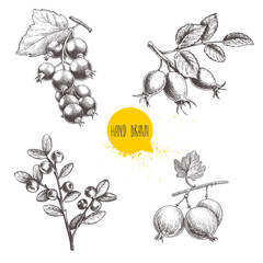 Hand drawn sketch style berry branches set. Blueberry branch, rose hip branch, black or red currant and gooseberries with sliced berry. Eco berries vector illustration isolated on white background.