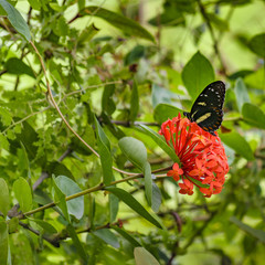 Butterfly over Flower at Botanic Garden, Guayaquil