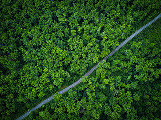 Road through the forest, view from height - aerial photo