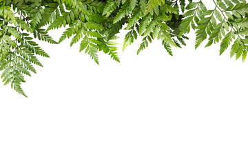 green leaves for frame on white background, nature border