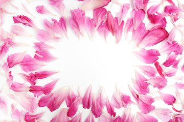 Pink petals of peony flowers lying on white background with place for text in the middle of the frame. Flat lay.