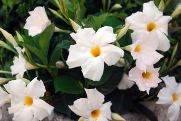 photos, illustrations et vidéos de fleurie